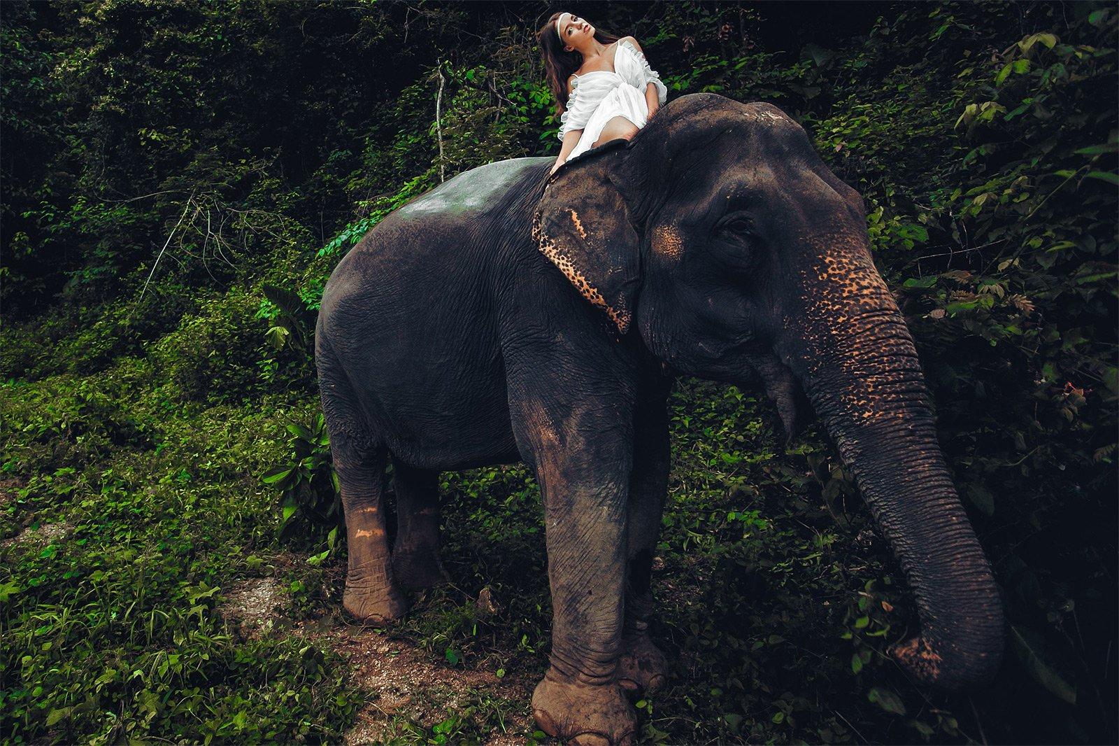 Elephant fuk women — 11