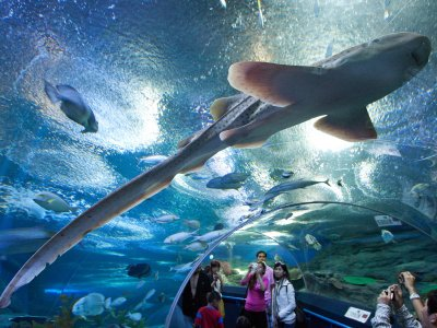 Океанариум «Underwater World Pattaya» в Паттайе